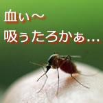 蚊に刺された時の対処法!予防法は?痒くなる原因は?