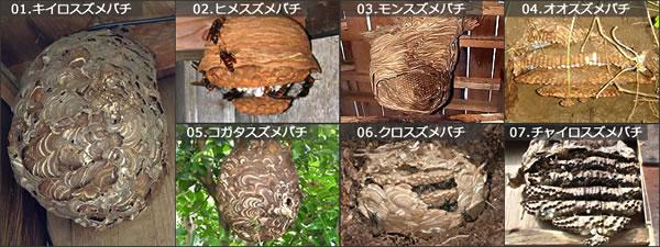 スズメバチの種類と巣の違い