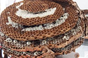 スズメバチが巣を作りやすい場所