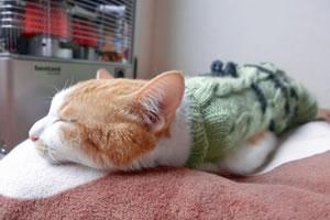 わずか1分程度で眠れる「4-7-8呼吸法」睡眠以外の効果も!