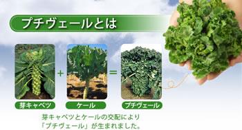 春が旬の新野菜「プチヴェール」とは