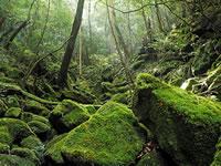 日本の世界遺産画像「屋久島」