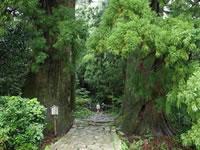 日本の世界遺産画像「熊野古道 - 紀伊山地の霊場と参詣道 -」
